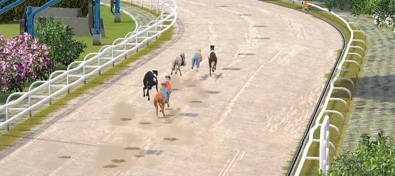 Greyhound Race - Virtual Sports Betting Guide